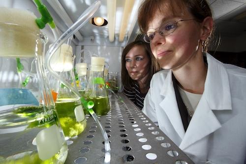 Misericordia University: Biology