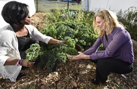 Asia Thompson talks with Katherine Pohlidal while picking kale at the Rasmussen House garden at Misericordia University.